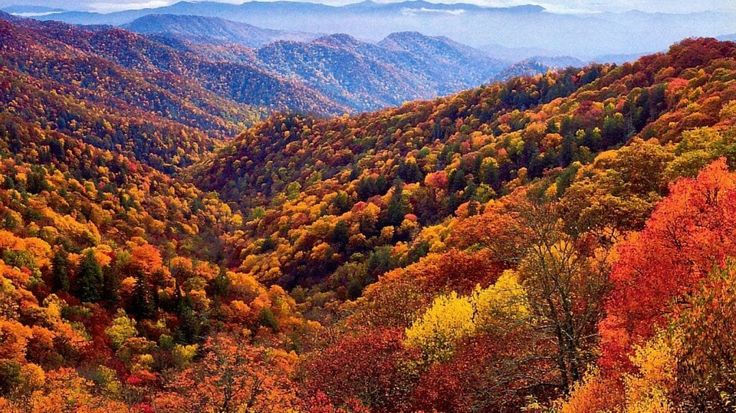 Hilly+Autumn+Forest+&+Sky