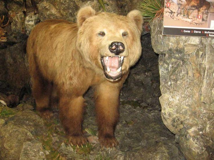 Galería de fotos » Excursiones - Museo de la Fauna Salvaje   GMR summercamps