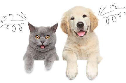 Compare Pet Insurance - Pet Insurance Comparison Chart