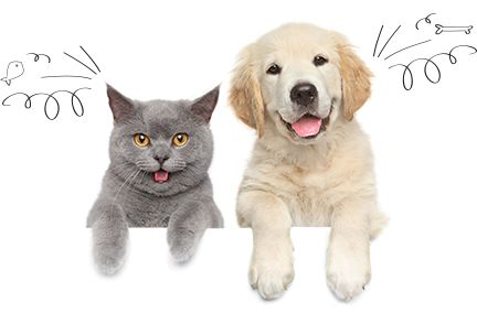 Compare pet insurance. 2016 pet insurance comparisons. Compare top plans side-by-side to find the best pet insurance for your dog or cat.