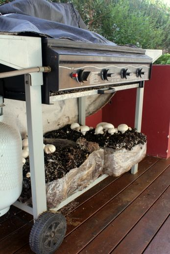 This is something I would really like to do - How to grow mushrooms at home
