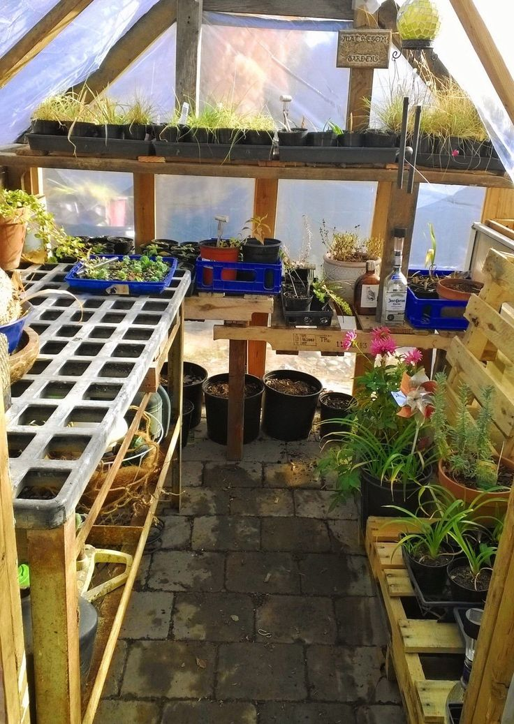 Inside of my greenhouse! Shelving used are pallets, an old