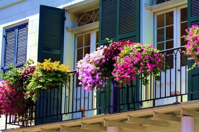 Kletterpflanzen Balkon
