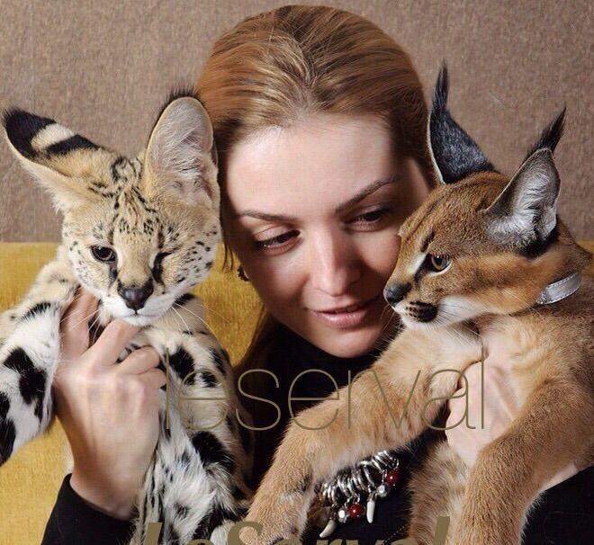 Самые редкие и красивые кошки. Сервал и Каракал.
