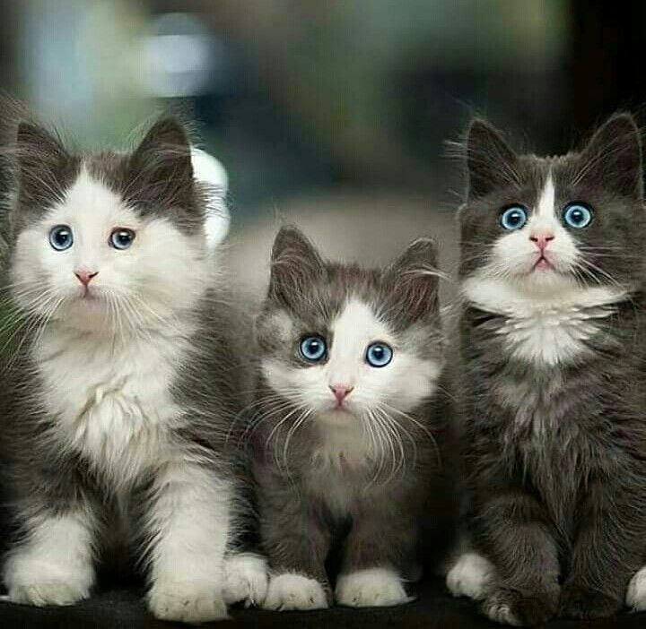 Pin By Mks On Karamelitsa And Friends Cute Cats Kittens Cutest Baby Cats