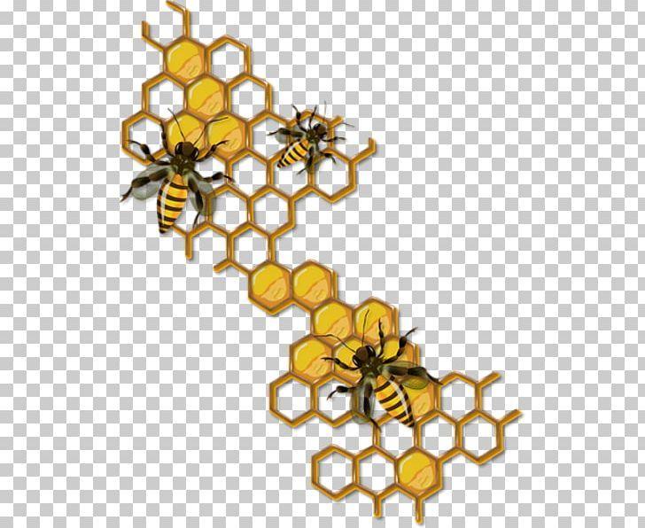 Honey Bee Drawing Honeycomb Insect Png Bee Beehive Beekeeping Body Jewelry Branch Honey Bee Drawing Bee Drawing Bee Painting