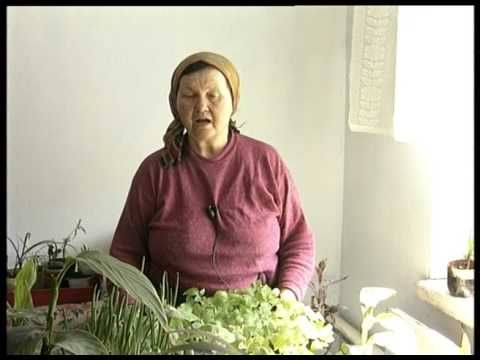 Как выращивать арахис на огороде? Рассада арахиса - YouTube