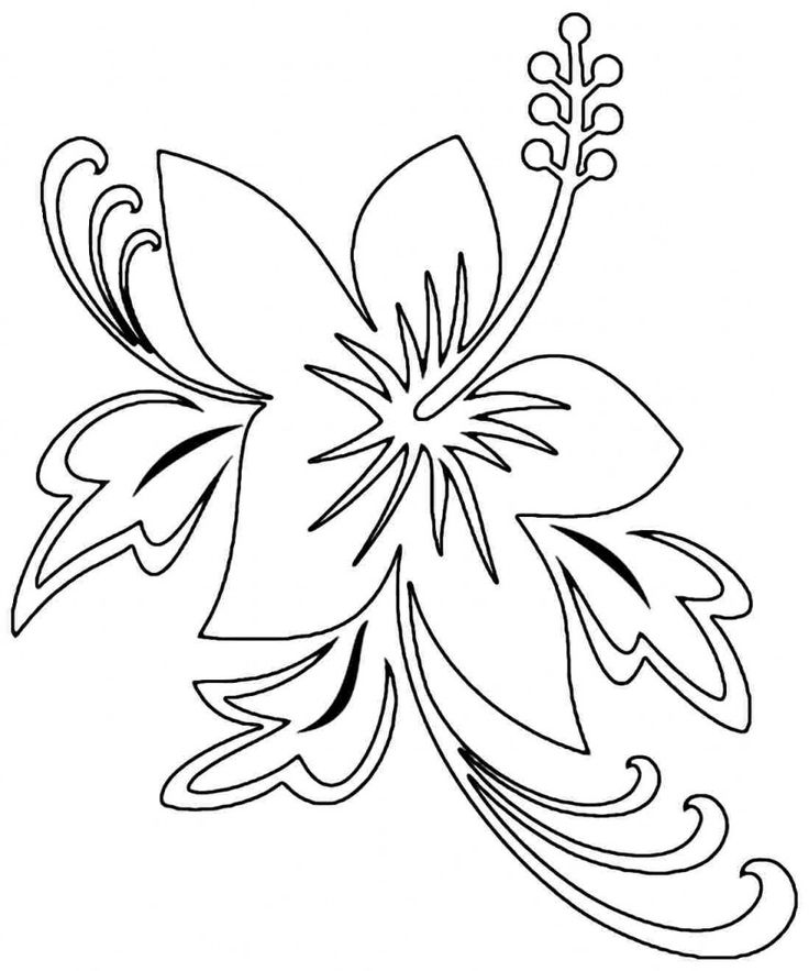 115 best flower coloring pages images on pinterest for Hibiscus flower coloring page