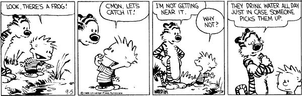 Calvin and Hobbes, September 05, 1986 - (frogs) They drink water all day just in case someone picks them up.