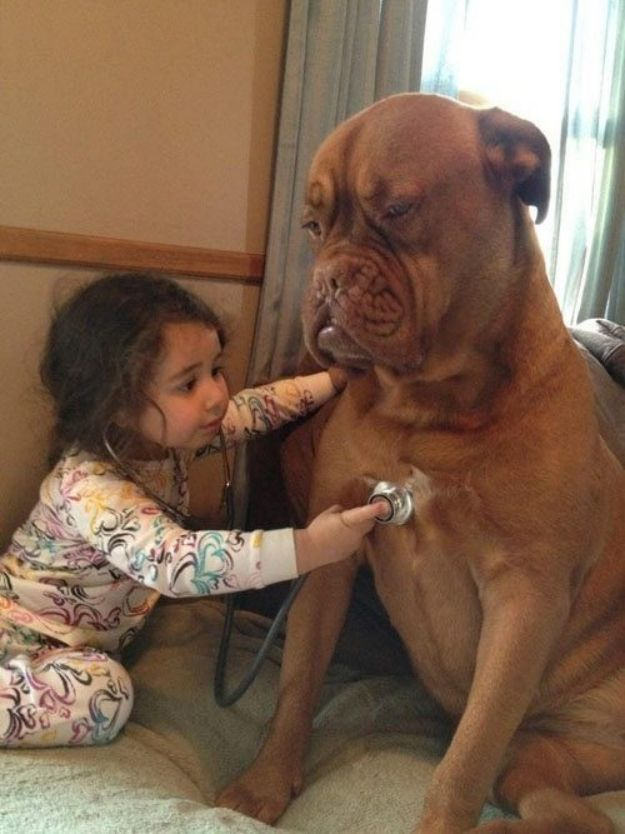 This patient pup that will play doctor to amuse this little girl. | 27 Dogs That Will Do Anything ForKids