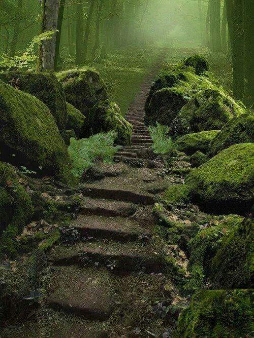 Sherwood Forest, England.