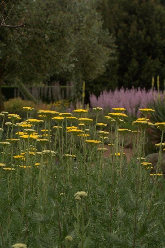 The Dry Garden - Lambley Nursery