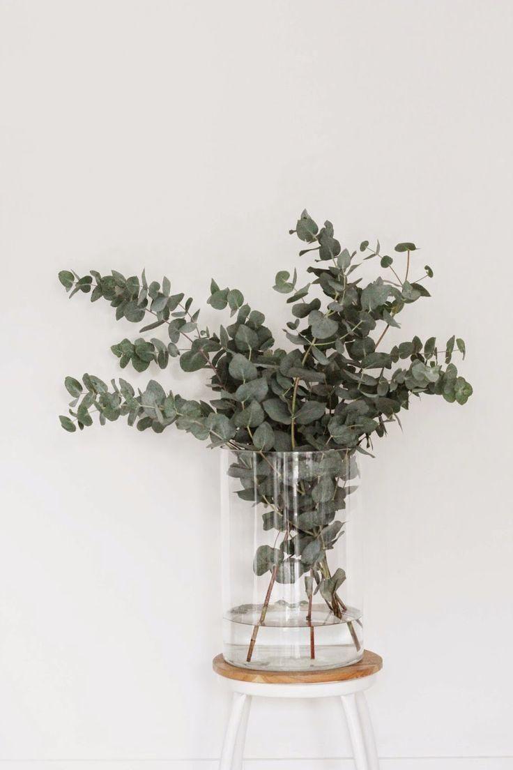 Ramas de eucalipto: Ideas para dar ese toque natural y acogedor en tu hogar.