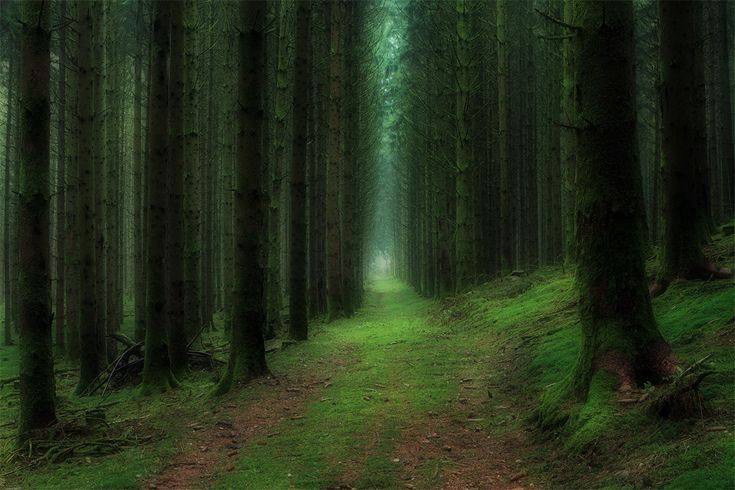 deep in the forest, france