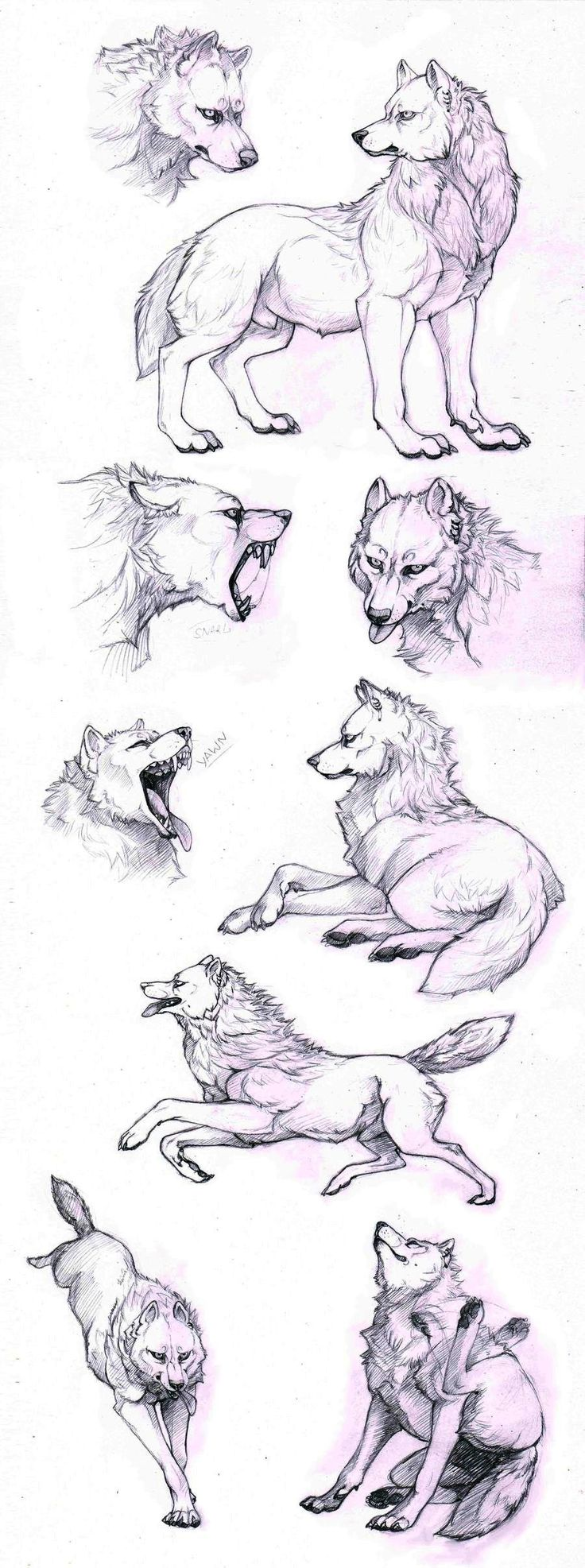 How To Draw A Wolf  Different Poses: Howling, Lying, Standing  Animal
