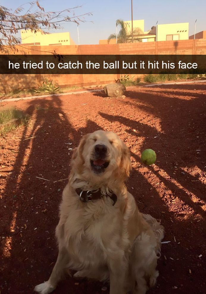 40 Funny #Dog #Snapchats That You Need To See Right Now