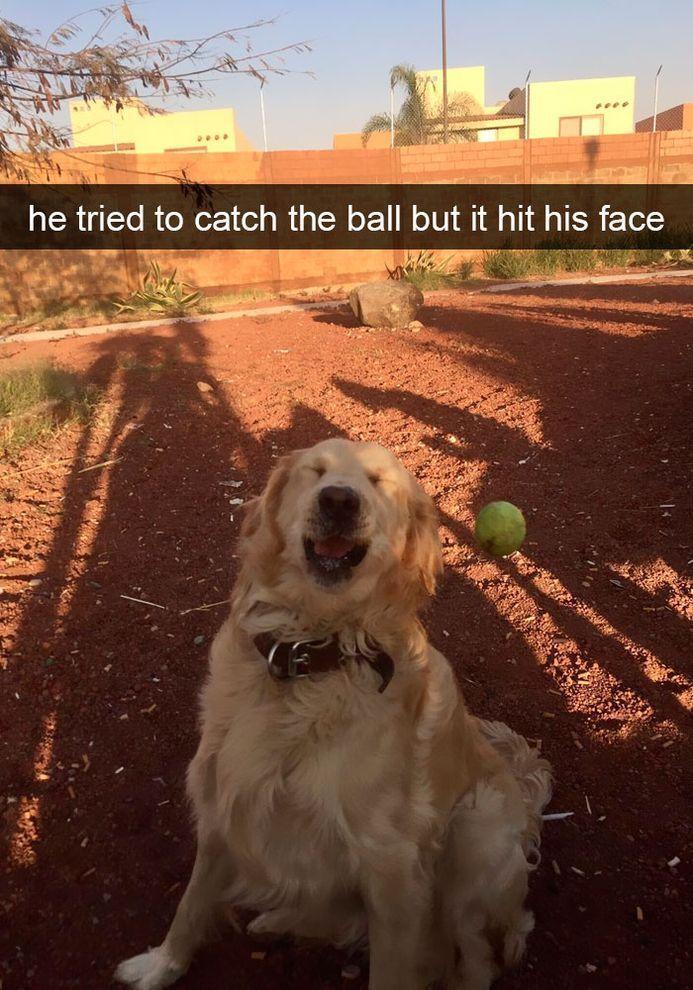 Más de 40 divertidos Snapchats para perros que debes ver ahora mismo   – Random Crap