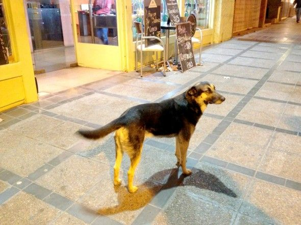 Unwanted dog saves her guardians 2 daughters from being raped. – Argentinean Street Dog.11/14/2013