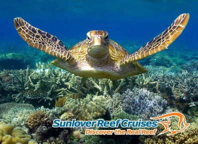 Great Barrier Reef Tours Snorkeling Diving Cairns Reef Tours
