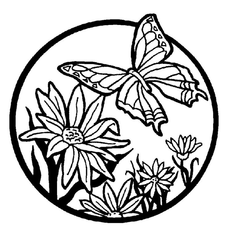 butterfly in the flower coloring page