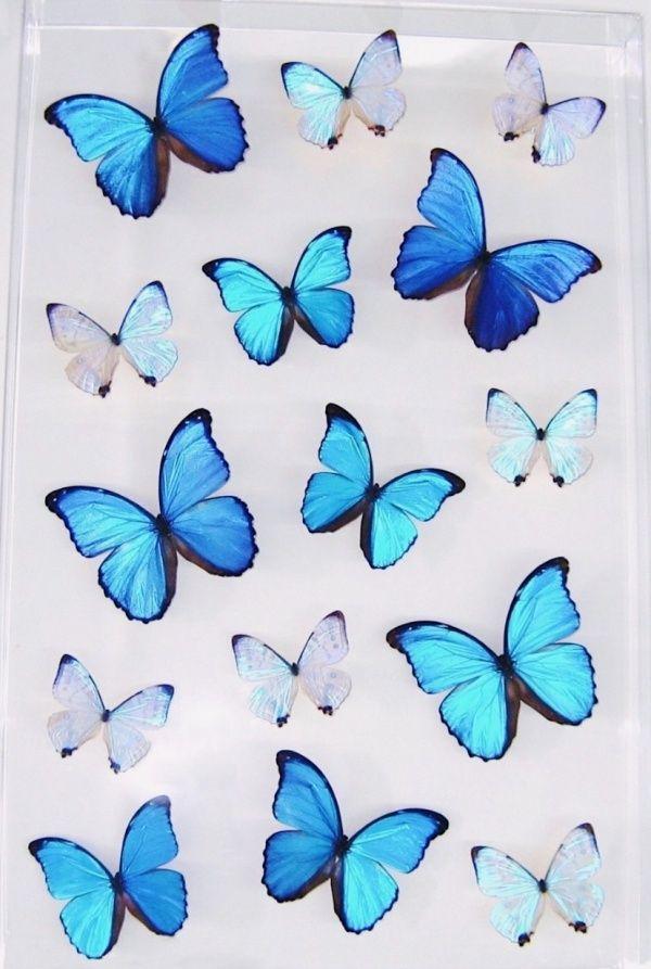 Sunshinelifee Blue Butterfly Wallpaper