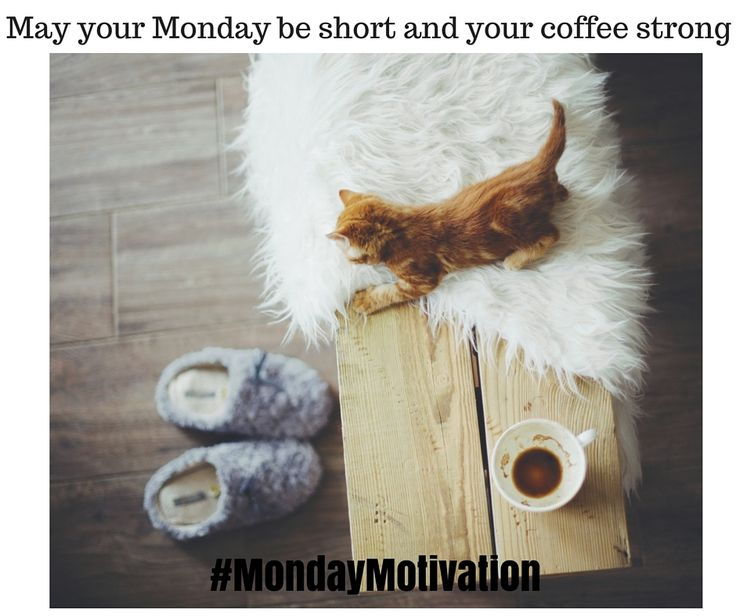 What is your wish this Monday? #Mondaymotivation #coffee #cats