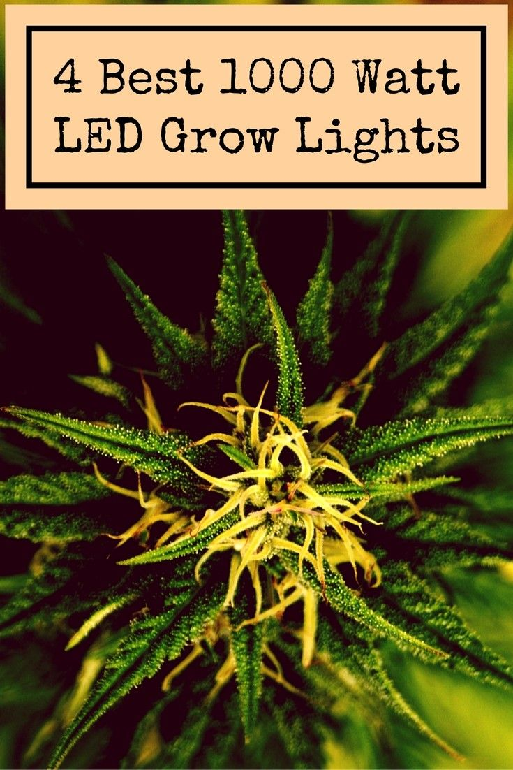 1000 Watt LED Grow Light - Top 4 Lights For Sale in 2018 ...