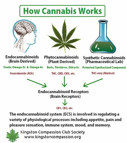 How Cannabis Works. Join the Movement with a payment plan here: http://cbdpl.us #CBD #Kway #hempVap