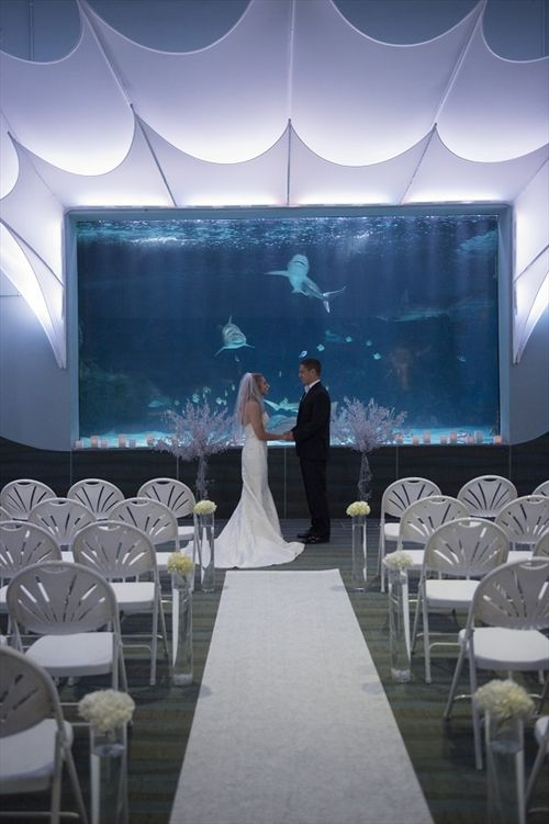 Newport Aquarium Perfect Wedding Guide Http Www Perfectweddingguide Listing 14311 Venues Events And Parties Pinterest