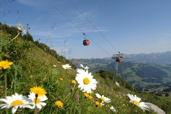 Rinderberg, Zweisimmen