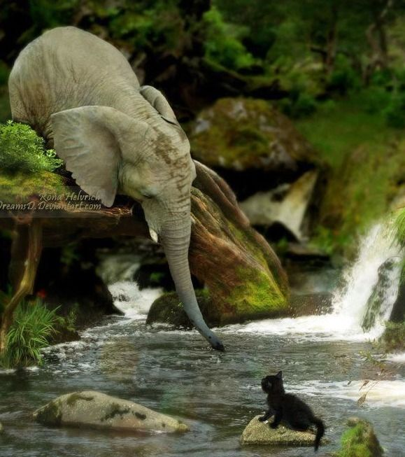 love this! #elephant #cat #water