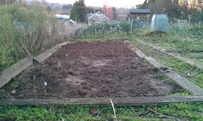 The beginnings of the fruit bed. Nov 2012
