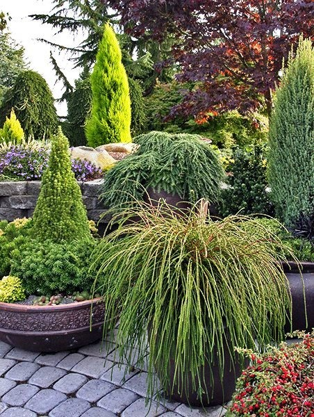 dwarf conifer display from nw construction and landscape amazing container ideas