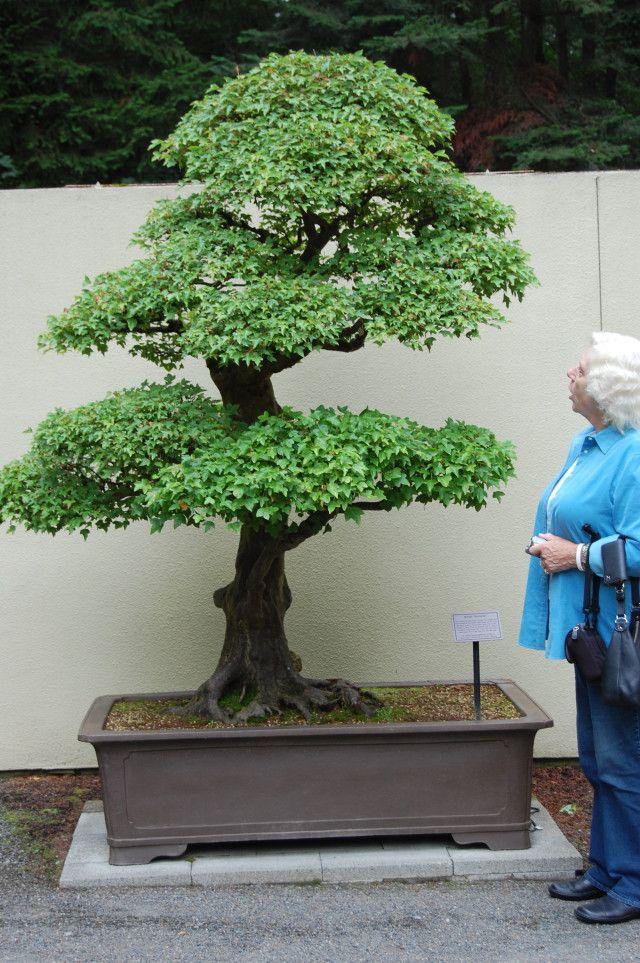17 best images about bonsai rock on pinterest maple. Black Bedroom Furniture Sets. Home Design Ideas
