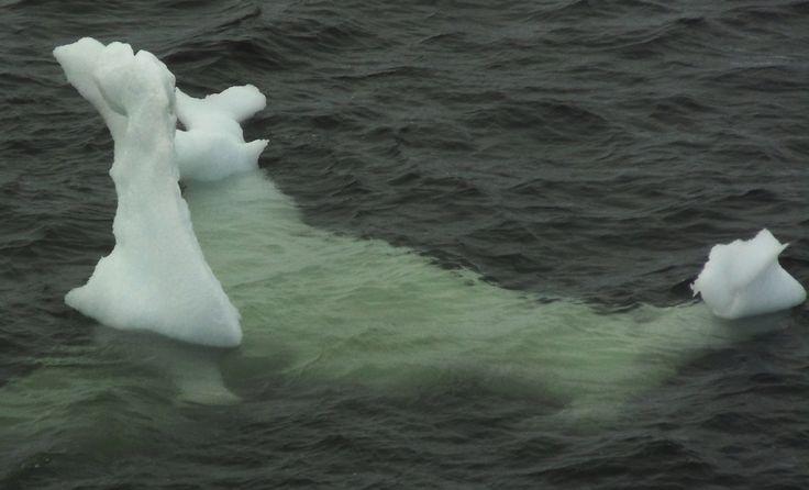 Curioso Iceberg