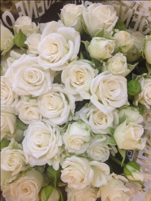 Spray Rose White Lady...Sold in bunches of 10 stems from the Flowermonger the…