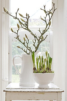 Forcing branches and bulbs for Spring beauty before spring arrives.