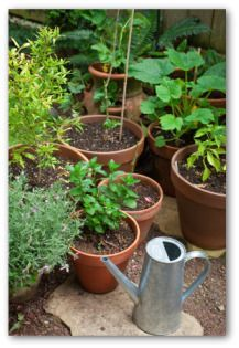 78 best Container Gardening images on Pinterest