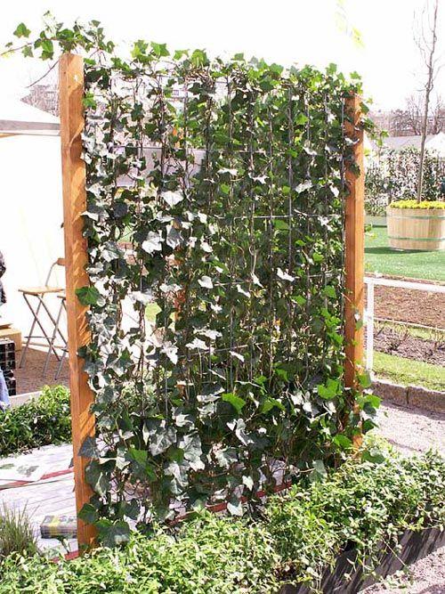 V xter som insynsskydd s k p google garden for Vegetable garden pergola