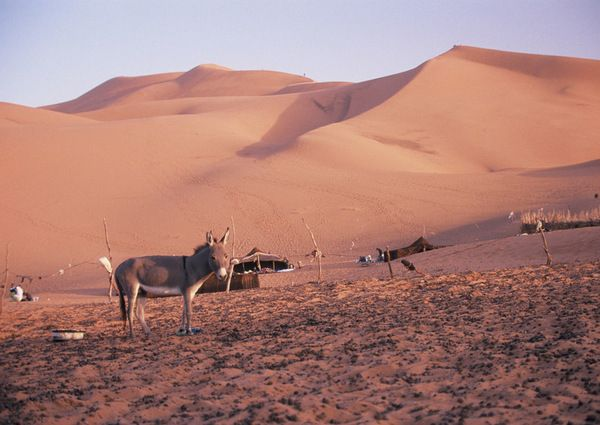 Lonely donkey