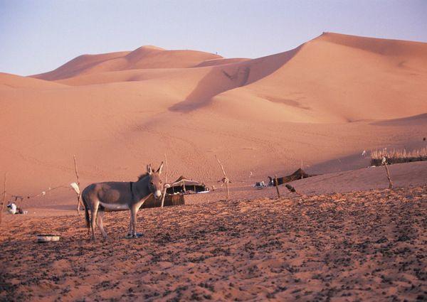 Lonely donkey