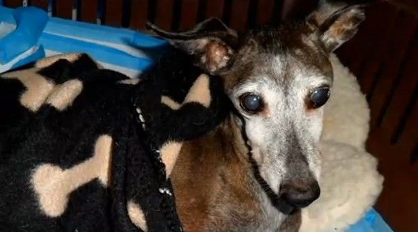 Dog found nearly frozen solid on Rhode Island street on New Years Day! Demand Justice for Elsa! | YouSignAnimals.org