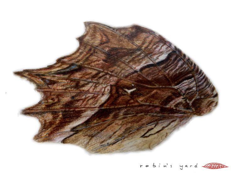 Polygonia egea (Southern Comma) hindwing underside (watercolor and color pencils, 14,8x21cm)