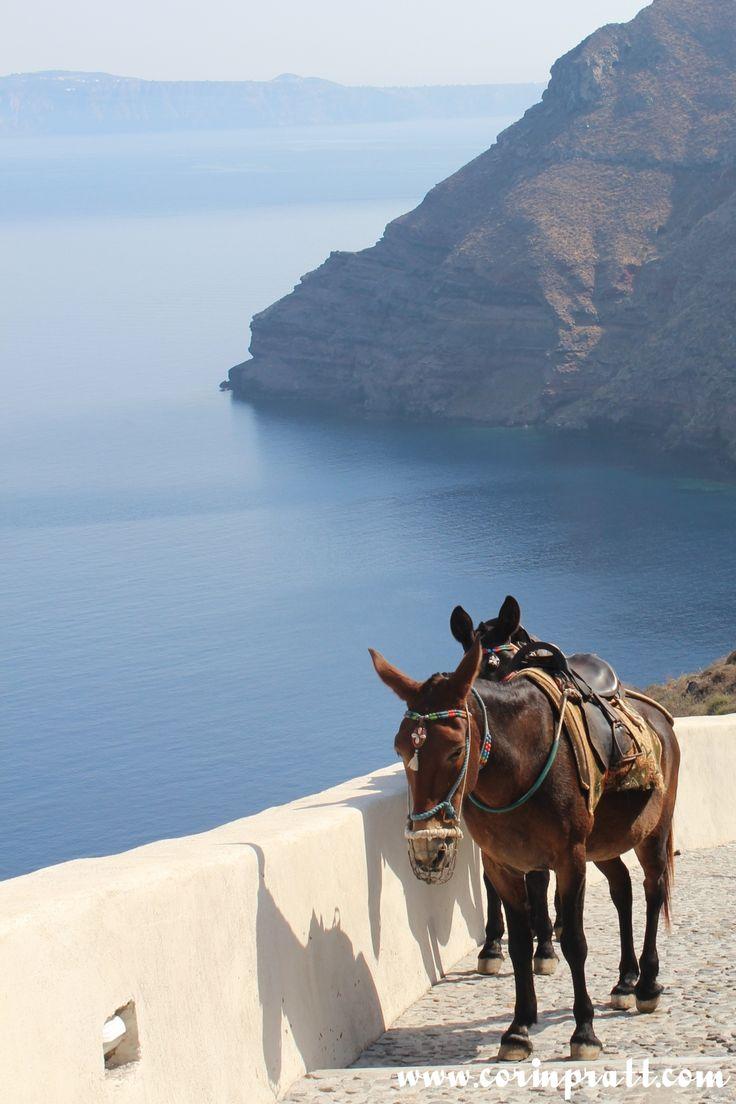 Proposing on a donkey ride in #Santorini is very romantic...Donkeys go slow and women just love them!  #Greece #weddingproposal #proposal #Santorini