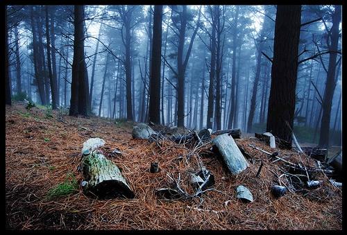 rut woud