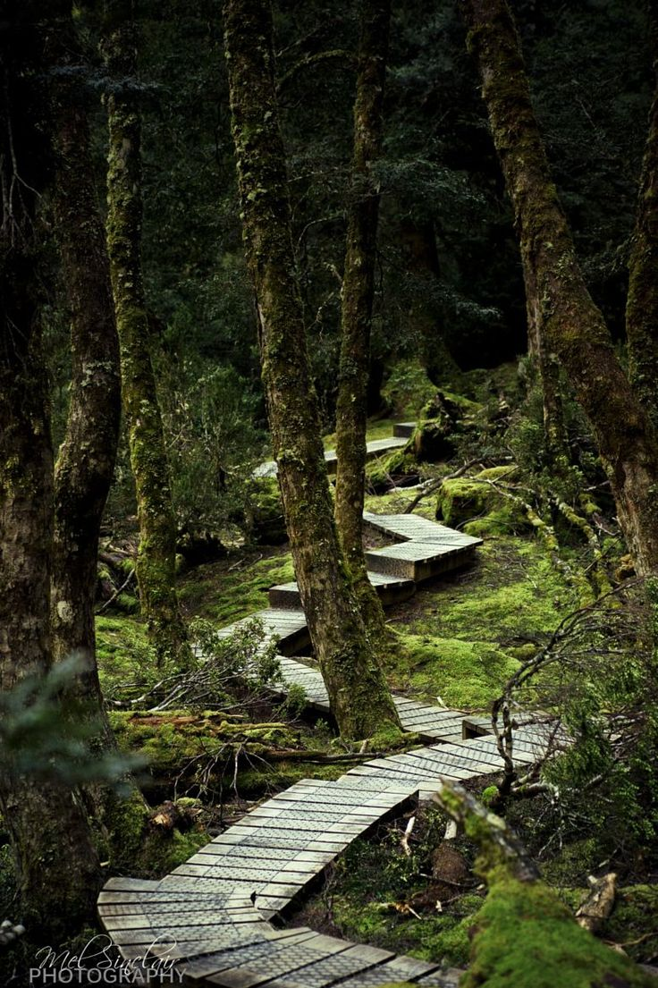 Rainforest walk at Cradle Mountain, Tasmania, Australia by Mel Sinclair on 500px