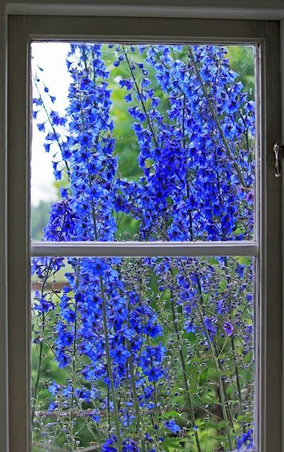 flowers out the window      ceciliaartista     (via landscapes-and-dreams)