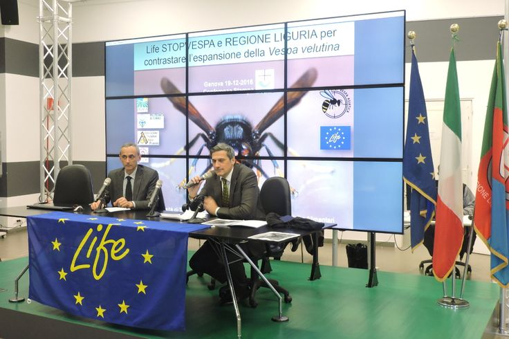 A inizio dicembre 2016 sono stati localizzati e neutralizzati 409 nidi di Vespa velutina, per la quasi totalità dalle squadre del progetto LIFE e dai nuclei di Protezione Civile di Ospedaletti e Bordighera che collaborano al progetto stesso.
