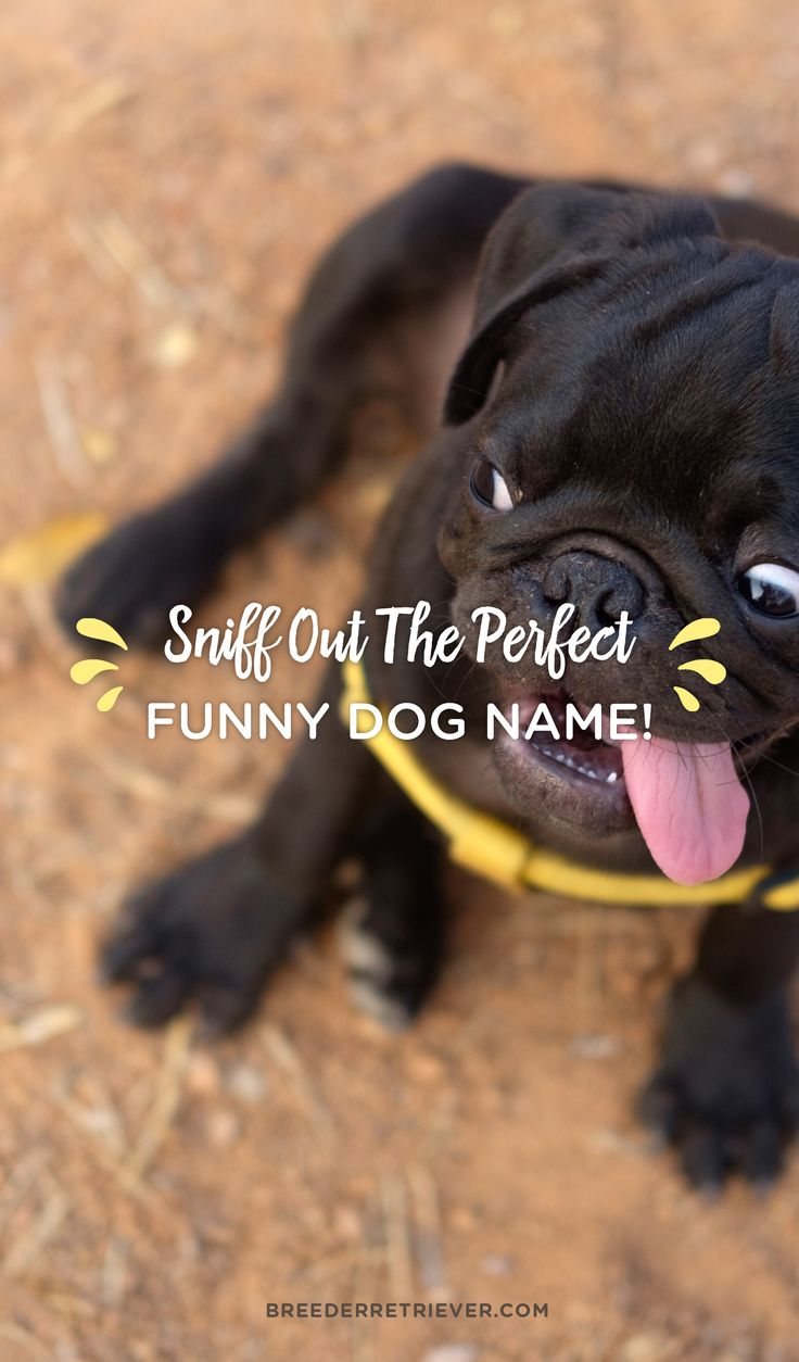 Is your pup a total goofball? Give them one of these funny dog names to match their personality!