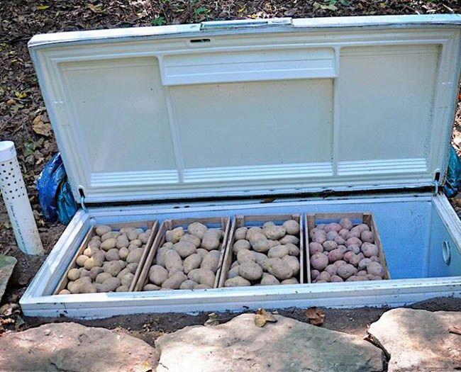 Portable Root Cellar : Best homesteading images on pinterest backyard